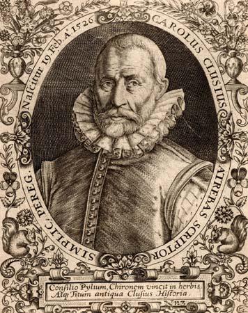 Clusiaus